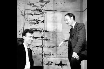 crick and watson Sexuagenerian Double Helix